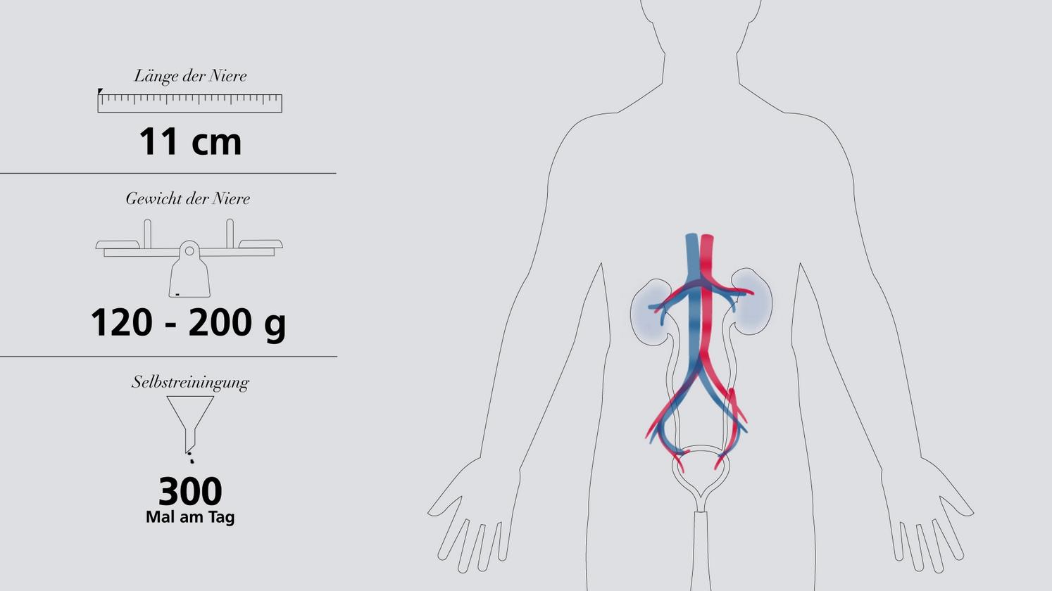 Die Nieren verstehen - Video - Fresenius Medical Care